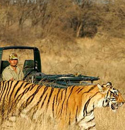 Ranthambore - Search for the elusive tiger on two included game drives